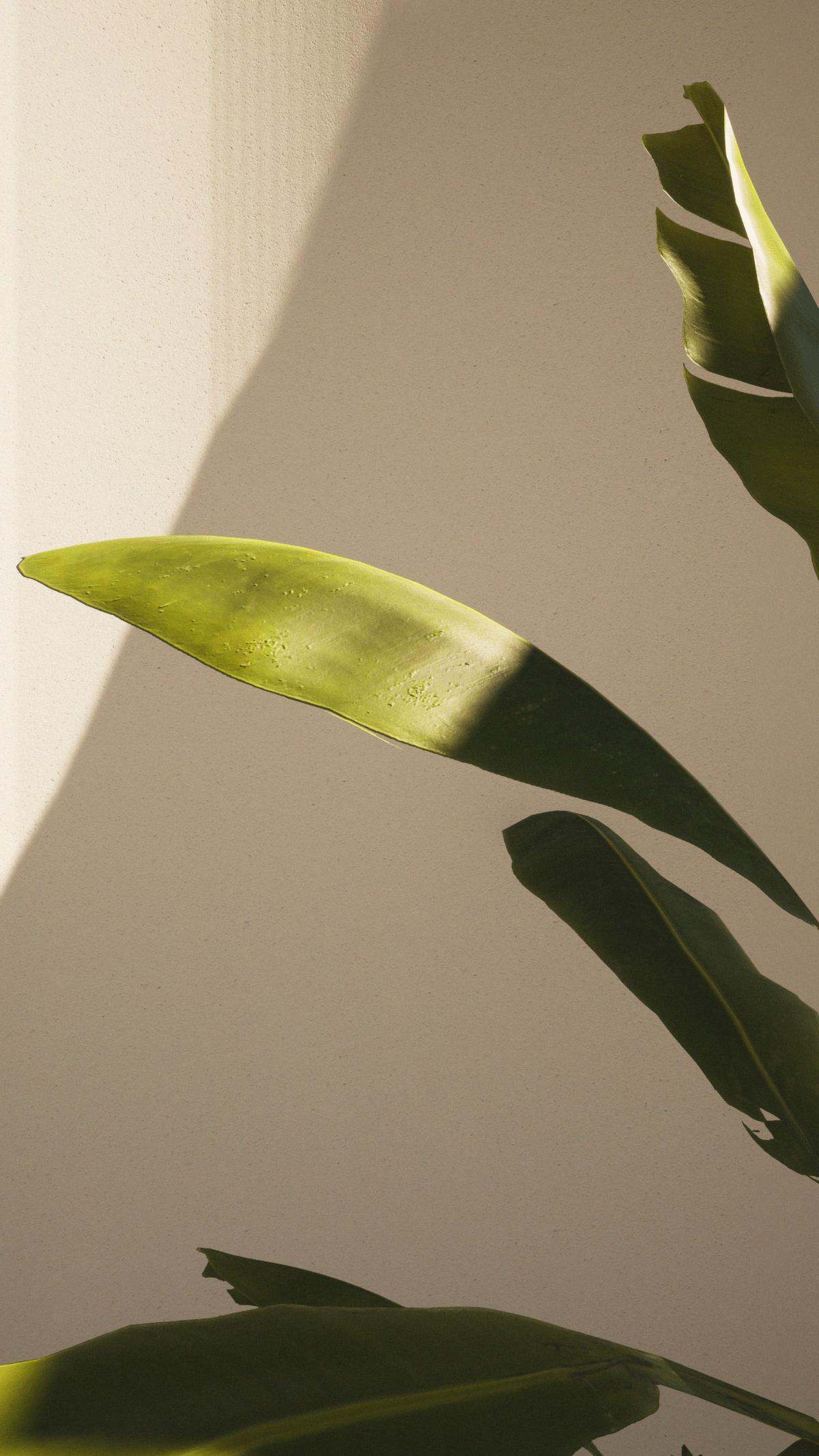 #8 - Vegetation