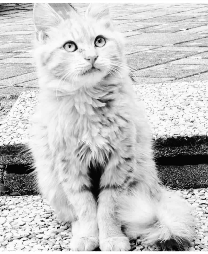 Cats#1