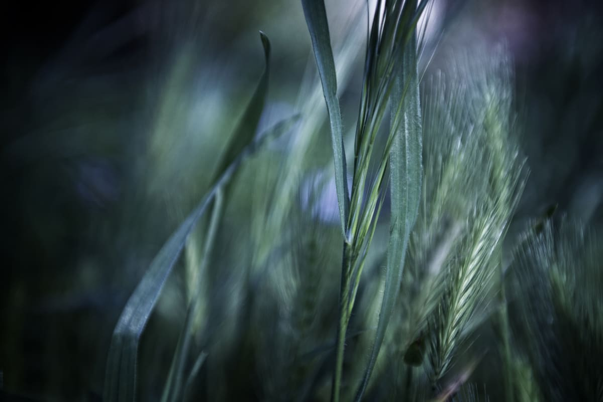 Spring Grass Emerging