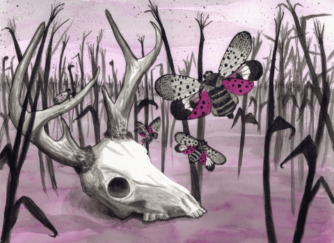 Drought and Lanternflies