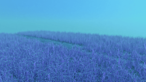 Grassy field in twilight