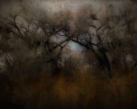 Misty Cottonwoods in Autumn
