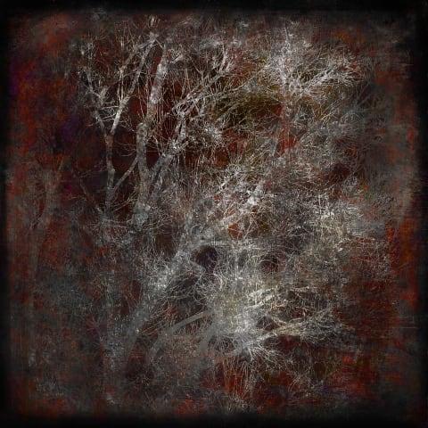 Silver Trees in Winter
