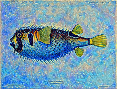 A Fish 1