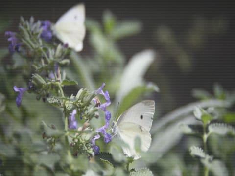 my_digital_garden_2