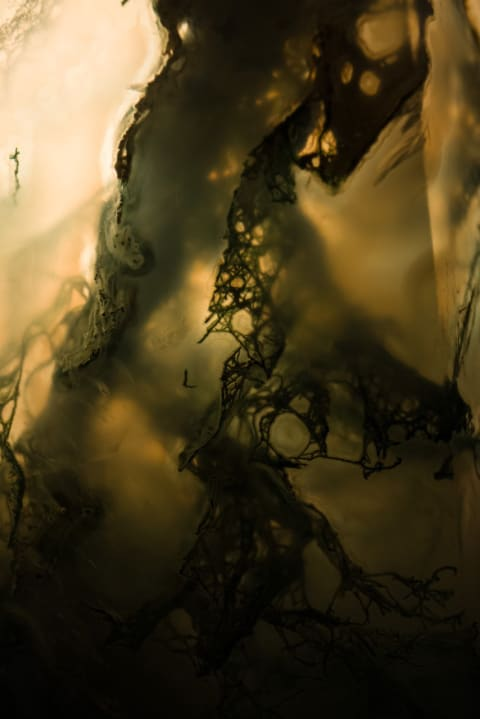 Otherworlds III : Venomous Veins
