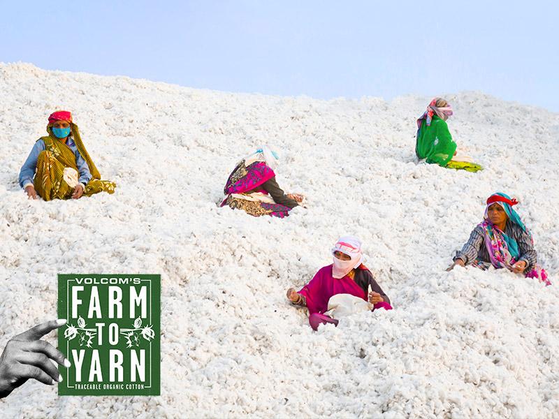 women sitting in cotton