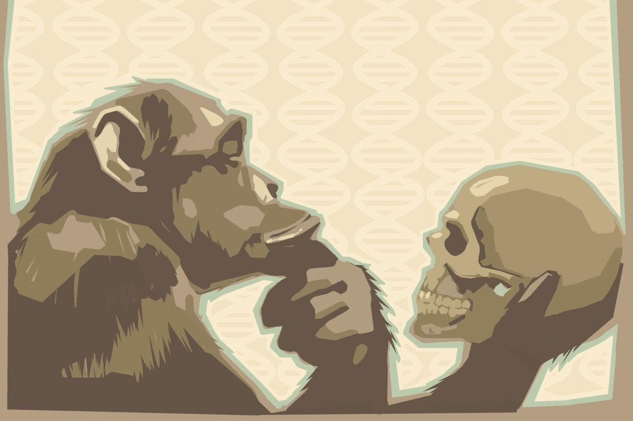 Does evolution contradict the Bible?   Bibleinfo com
