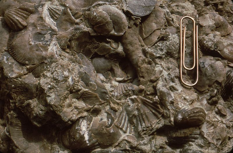 Small fossils