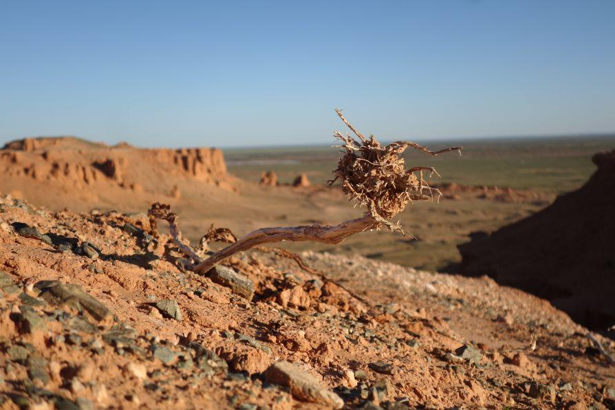 desert Gobi bayanzag steppe