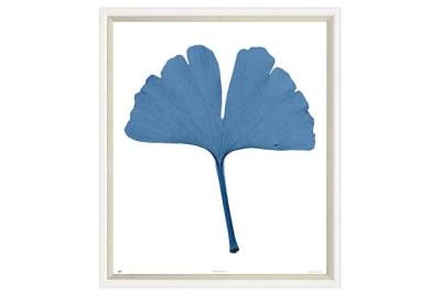 Blue Gingko Leaf
