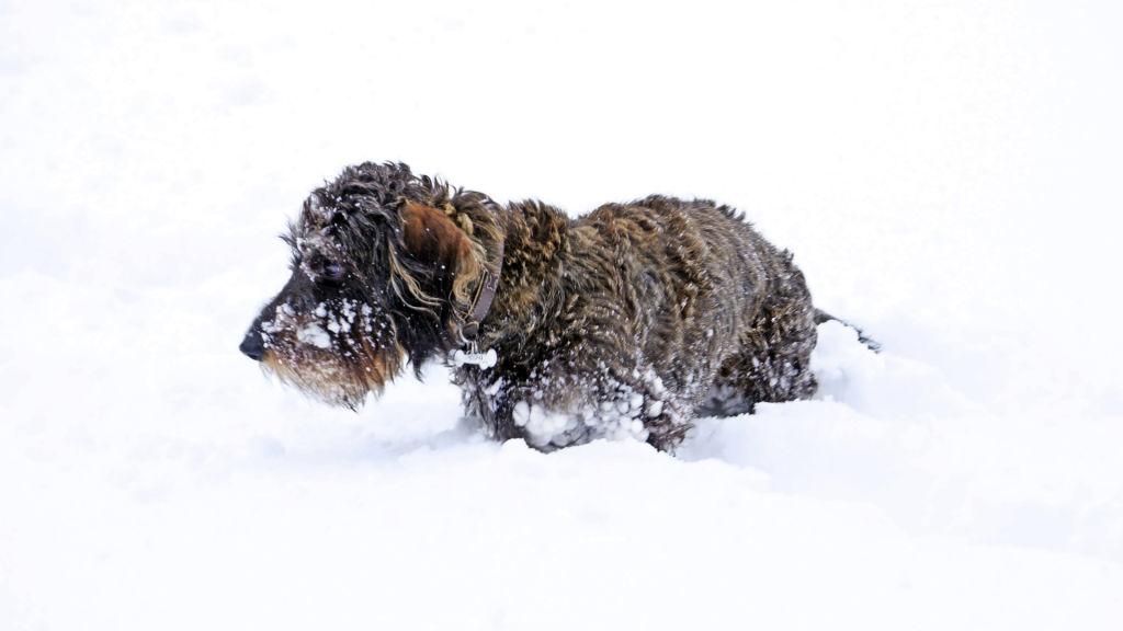 Malý pes ve sněhu