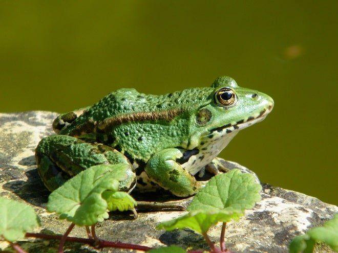 Giải mã giấc mơ: Nằm mơ thấy ếch đánh con gì, có điềm báo gì?