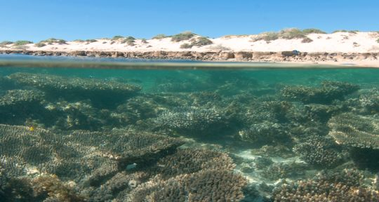 Ningaloo Reef by Peter Nicholas