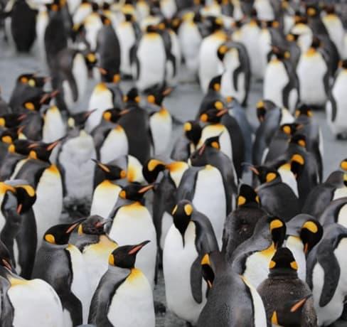 Pendrive bootável Linux: Passo a passo completo para instalação