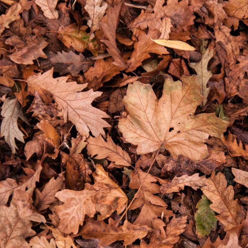 Autumn leaves by Peter Crosby