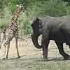 Swaziland Tour
