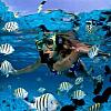 Snorkeling Adventure.