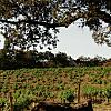 Hanzell Vineyards- Heritage Winery & Estate Vineyards Tour