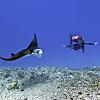 Manta ray night swim