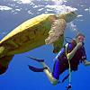 Scuba Dive at Honua Kai