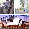 Opera and Koalas