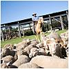 Tobruk Australian Outback Experience