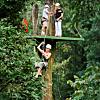 Canopy Tour (Zip Line Adventure)