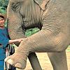 2 days at an elephant camp