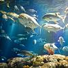 Charleston Harbor Aquarium