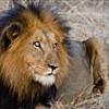 Lodging - Kruger National Park