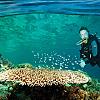 Scuba Diving off the An Thoi Islands