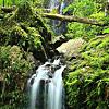 Rainforest day hike