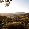 Kuleto Estate - Special Wine Tasting