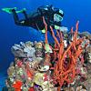 Activity: Scuba Diving