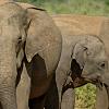 A trip to Pinnewala Elephant Orphanage