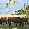 Maui Horseback Ride