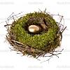 Post-honeymoon Nest Egg