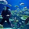 Scuba Diving Excursion