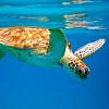 Half Day Snorkeling Trip
