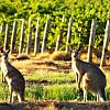 Wine tasting in Adelaide