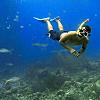 Honeymoon: Snorkeling in the ocean reefs