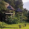 Jungle Hotel