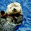 Tickets to the Vancouver Aquarium