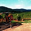 Bicycle Vineyard Tour