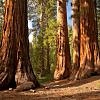 Glacier to Redwoods
