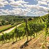 Wine tasting in Tuscany