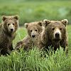 Alaska Bear Adventures