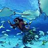 Deep Sea Suba Diving