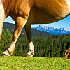 Haflinger Horseback Ride for 2 in Jenesien/San Genesio